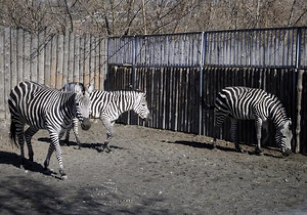 график работы зоопарка: