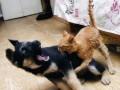 Собачья жизнь: как тяжело приходится щенятам