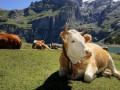 В Швейцарии провалились два референдума