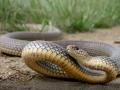 В детсад под Полтавой вызвали ГСЧС: завелись змеи
