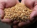 Украина намерена запретить ввоз российского зерна из-за угрозы заноса ящура - Ъ