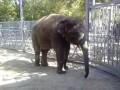 В Киевском зоопарке появится слон из Ростова-на-Дону