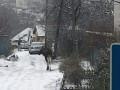 По улицам Киева гулял лось… снова