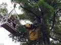 Китаец застрял на дереве во время предложения и получил отказ
