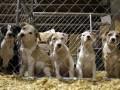 Власти Киева опровергли слухи о массовых отравлениях бездомных животных