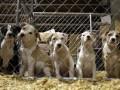 Приют для животных планируют построить в пределах Киева