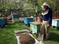В Запорожской области массово гибнут пчелы
