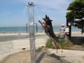 Экстремальная жара в Австралии: температура превысила 40°C