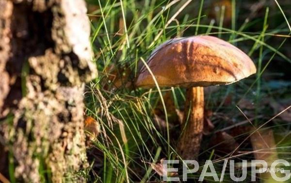 Пять харьковчан отравились грибами