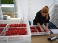 Среди больных COVID на ферме в Германии украинцев нет