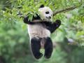 Животные недели: День рождения панды и черная кошка на стадионе