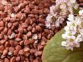 Минагропрод просит фермеров сеять больше гречки