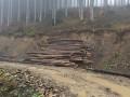 В Сети показали масштабы вырубки леса в Карпатах