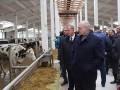 Лукашенко: Коровы обошлись стране на вес золота
