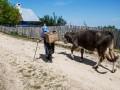 В Харьковской области женщину с коровой засосала трясина