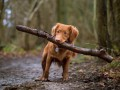 Россияне отказываются от домашних животных из-за коронавируса