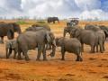 В Зимбабве вдвое увеличилось число неожиданно умерших слонов