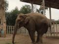 В Харькове чествовали слониху, первой родившуюся в независимой Украине