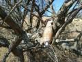 В Крыму на дереве нашли бомбу времен Второй мировой войны