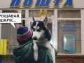 Итоги 2 февраля:Скандал с собакой и конфликт на Донбассе