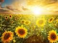 Прогноз погоды на неделю: в Украину возвращается жара