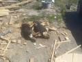 Неизвестные отравили 25 собак в Голосеевском районе