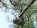 В Каменском целый день спасали кошку с дерева