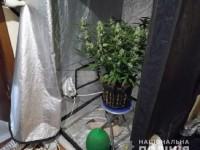Мужчина превратил столичную квартиру в теплицу для выращивания марихуаны