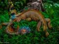 Ящерицы-драчуны и очковые гаги: животные недели