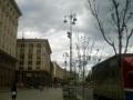 Киевляне выбрали деревья для посадки на Крещатике