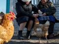 За убийство курицы украинца осудили на пять лет
