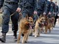 Служебные собаки за год обнаружили центнер наркотиков