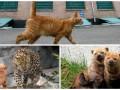 Животные недели: кустарниковая собака-подозревака, покемон в зоопарке и кошка в СИЗО