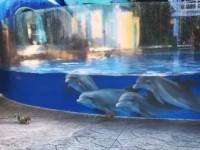 В США дельфины любовались белками, посетившими океанариум