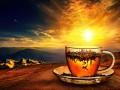 В Украине начала работу новая чайная фабрика