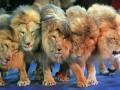 Киевские львы и слон без шеи: лучшие ФОТО животных