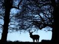 В США нашли двуглавого олененка