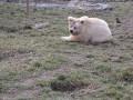 Аномальное тепло в Украине: Под Житомиром проснулись медведи