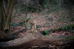 Ученые сосчитали возраст самых старых деревьев - фото