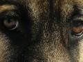 В Киеве мужчина выбросил с 7 этажа щенка: живодеру грозит тюрьма