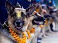 Шведская армия купила 59 собак за миллион евро - СМИ