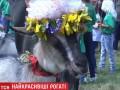 В Тернопольской области прошел конкурс красоты среди коз
