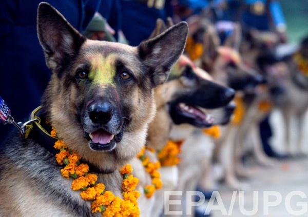 Закупка армией собак может быть незаконной, так как не было объявлено о проведении открытых торгов