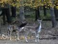 С 1970-х годов люди уничтожили 60% животных на Земле - WWF