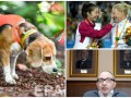День в фото: Бигль-ищейка, награждение паралимпийцев и пресс-конференция Кернеса