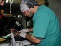 У спасенной из цирка медведицы обнаружили цирроз