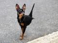 Собаки из параллельного мира или птицедоги