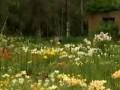 В Харькове расцвели тысячи лилий