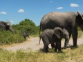 Власти Намибии продают десятки слонов с аукциона