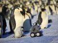Ученые разработали робота-шпиона, чтобы следить за пингвинами (видео)